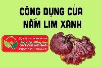 Mua bán sỉ & lẻ Nấm Lim Xanh rừng khô ngâm rượu, công dụng và tác dụng chữa bệnh Nấm Lim Xanh rừng, Địa chỉ bán, Giá bán, Mua ở đâu? 1