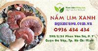 Mua bán sỉ & lẻ Nấm Lim Xanh rừng khô ngâm rượu, công dụng và tác dụng chữa bệnh Nấm Lim Xanh rừng, Địa chỉ bán, Giá bán, Mua ở đâu? 2