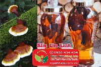 Mua bán sỉ & lẻ Nấm Lim Xanh rừng khô ngâm rượu, công dụng và tác dụng chữa bệnh Nấm Lim Xanh rừng, Địa chỉ bán, Giá bán, Mua ở đâu? 3